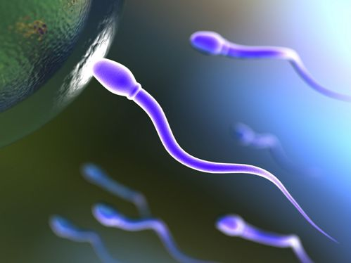 Espermatozoide y ovulo