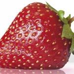 Las fresas y su efecto sobre el colesterol malo