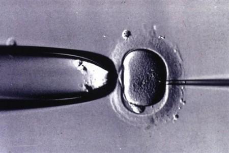 Ovodonación, proceso de donación de óvulos